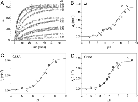 pKa plots for wild-type and single cysteine sStoA variants. A, time-dependent increases in fluorescence at 510 nm upon reaction of wild-type (wt) sStoA (1 μm) with 6-bromoacetyl-2-dimethylaminonaphthalene (15 μm) in PCTC buffer system at pH values from 5 to 9 as indicated at 25 °C. Plots were fitted (solid lines) to obtain an observed, pseudo-first order rate constant, ko. B, plot of ko as a function of pH for wild-type sStoA. The solid line shows a fit to supplemental Equation S4. C and D, plots of ko as a function of pH obtained from similar experiments with C65A and C68A sStoA, respectively. Solid lines represent fits of the data to supplemental Equation S3.