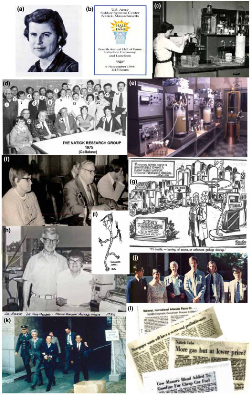 Images from Mary Mandels' career. Dr Mary Mandels was one of Natick's original employees of the Pioneering Research Laboratory. Her research included screening fungal cultures for their ability to produce cellulase and related enzymes. The purpose of the research was to increase the understanding of the deterioration of materials caused by fungal attack. From left to right: (a) Mary Mandels, 1917 to 2008: (b) US Army Hall of Fame, 1988; Natick Hall of Fame program cover; (c) Mary Mandels at the bench, Pioneering Research Laboratory, Natick, 1957; (d) The US Army Natick Pioneering Research Group, 1975: 1. Ed Black, 2. Dick Erickson, 3. David Sternberg, 4. Fred Allen, 5. Frank Snyder, 6. Frank Bisset, 7. Charlie Macy, 8. Ray Andreotti, 9. Curt Blodgett, 10. Marty Foncello, 11. Dr John Walsh, 12. Dr Aaron Bluhm, 13. military researcher, 14. Ben Gallo, 15. John Medieros, 16. Charles Roche, 17. Dr Carmine DiPetro, 18. Tom Tassinari, 19. Rosa Linda Bagalawis, 20. military researcher, 21. Mary Mandels, 22. Bob Mortenson, 23. Phil Hall, 24. Leo Spano, 25. Beverly Grant, 26. Edie Blodgett; (e) the Cellulase Laboratory, Pioneering Research Laboratory, 1975 (overview of the fermentor laboratory: six 14 litre fermentors (New Brunswick Scientific Co., Edison NJ, USA) plus a 30 litre seed and two production fermentors of 250 litre and 400 litre capacity, respectively); (f) US Congressional Energy Hearings, 1974: Congressman William Proxmire with Mary Mandels, Leo Spano and John Nystrom testifying (Congressman Proxmire was famed for his Golden Fleece award to those agencies that he thought had financially 'fleeced' the Government with arcane science; the US Army Natick program passed the 'fleece test' with flying colours); (g) The Natick Recycling Program as viewed by the local Press, 1974 (courtesy Worcester Telegram and Gazette); (h) Elwyn Reese and Mary Mandels: laboratory photo on the occasion of their receiving the Marvin Johnson Award, American Chemical Society, 1982; (i) insert cartoon of Elwyn Reese depicted as the mould Trichoderma and entitled 'The Fungus Factory' (Ray Andreotti artist); (j) Natick Cellulase Researchers: 'Cellulose as a Chemical & Energy Resource', University of California - Berkeley, 1974 (Andy Huang (postdoctorate), Mary Mandels, Elwyn Reese, John Nystrom, Bob Andren, Chul Kim (Korean AEC); (k) Natick Cellulase Group with visitors at Massachusetts Institute of Technology, May 1962: front row: (left to right) Chico Bomschell, Elwyn Reese, K Nisizawa (Tokyo, Japan), Nobuo Toyama (Miyasaki, Japan); second row: Mary Mandels, Keith Selby (Birmingham, UK); visitors while attending Advances in Enzyme Hydrolysis of Cellulose and Related Materials (American Chemical Society and US Army Symposium in Washington, DC); (l) the range of interests the US Army research programs: a selection of newspaper headings. Images courtesy of (a) Mandels' family; (b-e) US Army Pioneering Research Laboratory; (f) J Nystrom; (g) Worcester Telegram and Gazette; (h-j, l) Alfred A Allen; (k) D Eveleigh.