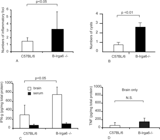 Inflammatory processes following T. gondii infection in the brains of B-Irga6−/− and wild-type mice.(A) Inflammatory foci were detected histologically at 39 days after infection of B-Irga6−/− with ME49 strain T. gondii as described in Materials and Methods. (B) Cysts were counted microscopically in brain homogenates obtained from infected mice 139 days after infection, as described in Materials and Methods. (C) IFN-γ and (D) TNF were determined by ELISA in brain homogenates and serum (C only) from B-Irga6−/− mice at 29 days after infection. Means ± SD are presented from 4 individual mice; results are representative for 3 experiments performed.