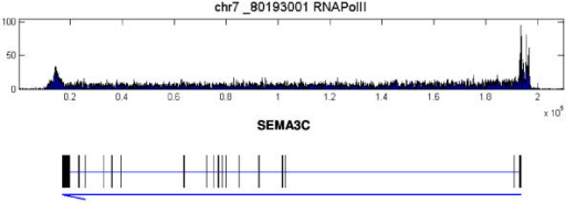 Examples of PolII ChIP-seq data for MCF7 cell line. ChIP-seq data for PolII binding pattern on SEMA3C in MCF7 cell control samples. The top lane shows the histogram of the PolII binding densities over a range of genome. The gene covered by this range is shown in the bottom lane. In the bottom lane, the thick bars below the gene symbol indicate exons of the gene while the blue arrow indicates its orientation. The tail and head of the arrow correspond to the transcription starting site (TSS) and transcription ending site (TES) of the gene respectively. The same arrangements are also applied to the other figures. It is apparent that PolII not only binds to the TSS regions of the gene but also form long enriched regions over the entire transcript.