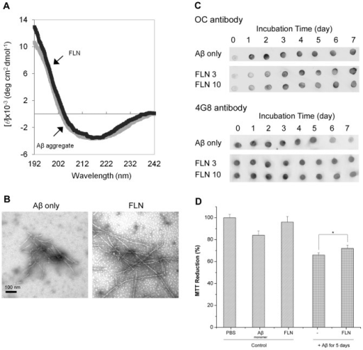 Modulation of Aβ aggregation and cytotoxicity by FLN.(A) CD spectra of Aβ monomer incubated for 7 days at 37°C in the absence (Aβ aggregate) or presence of 10x FLN (FLN). (B) TEM images of 50 µM of Aβ incubated for seven days at 37°C in the absence of any dye (Aβ only), or in the presence of 3x FLN. Scale bar is 100 nm. (C) Dot blot images of Aβ aggregates formed without (Aβ only) or with 3x and 10x FLN using OC and 4G8 antibodies. For each antibody, all samples were spotted onto one nitrocellulose membrane. Each membrane was immuno-stained with the OC or 4G8 antibody. For clearer presentation of the data, the sections of each membrane were cut and re-arranged. (D) Viability of neuroblastoma SH-SY5Y cells. Three controls (PBS buffer, Aβ monomer, and FLN) and two Aβ aggregates formed in the absence or presence of 3x FLN at 37°C for 5 days. Values represent means ± standard deviation (n≥3). Values are normalized to the viability of cells administered with PBS buffer only. Two-sided Student's t-tests were applied to the MTT reduction data. (*; P = 0.013).