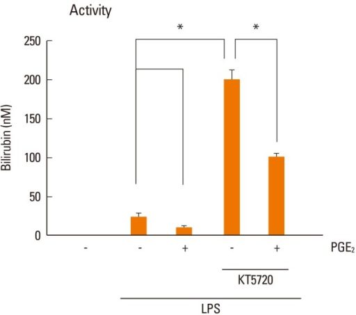 Inhibition of PKA induces an increase in HO-1 activity. Cells were pretreated with the PKA inhibitor KT5720 (1 µM) for 20 min followed by PGE2 (1 µM) or vehicle for 10 min and then incubated with LPS for 6 h. Supernatants were harvested, and HO-1 activity was measured as described in the Materials and Methods. Data represent the means±SEM of three separate experiments. *P< 0.05.