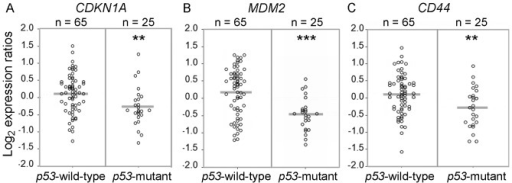 Loss of function mutation of p53 is not associated with elevated CD44 expression in colon cancer.Relative gene expression levels in p53 mutant and p53 wild-type adenocarcinomas for (A) CDKN1A (p21) (**, P<0.01), (B) MDM2 (***, P<0.001), (C) CD44, (**, P<0.01).