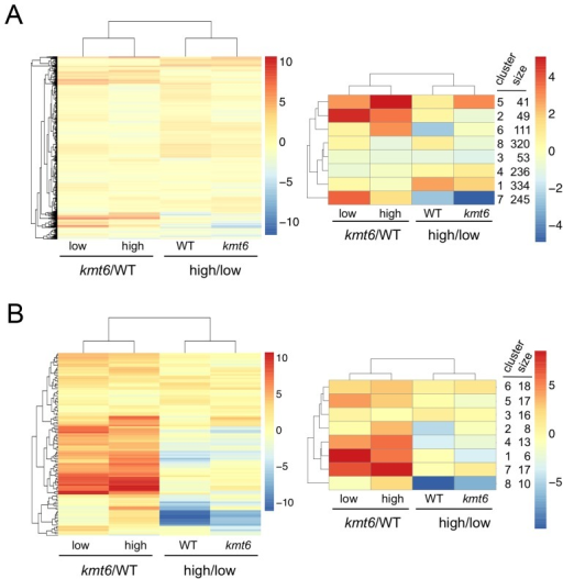 Heatmaps for individual genes in primary (A) and secondary (B) metabolism (left panels) and clusters of genes around eight centers (right panels).Few primary metabolic genes are affected by kmt6 mutation compared to the majority of secondary metabolic genes that have increased expression in kmt6. Values for the log2 of the ratio of RPKMs for kmt6/WT or high/low nitrogen conditions for each strain are color-coded and the scale shown on the right. For example, in the left image of (A) red represents log2 (kmt6/WT) of 10, which means the kmt6 RPKM is 1024-fold higher than the WT RPKM. Primary metabolic genes in clusters 2 and 5, upregulated in kmt6, and cluster 7, downregulated in high nitrogen, are listed in Table S2 with their putative functions. Secondary metabolic genes in clusters 1, 4, and 7, upregulated in kmt6, and cluster 8, downregulated in high nitrogen, are listed in Table S2 with their putative functions.