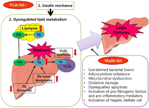 The Multi Hit Hypothesis Of NAFLD Pathogenesis First Such