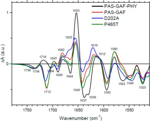 Light-minus-dark FTIR spectra of RpBphP2PAS-GAF-PHY (black), PAS-GAF(red), PAS-GAF-PHY D202A mutant (blue), and PAS-GAF-PHY P465T mutant(green).