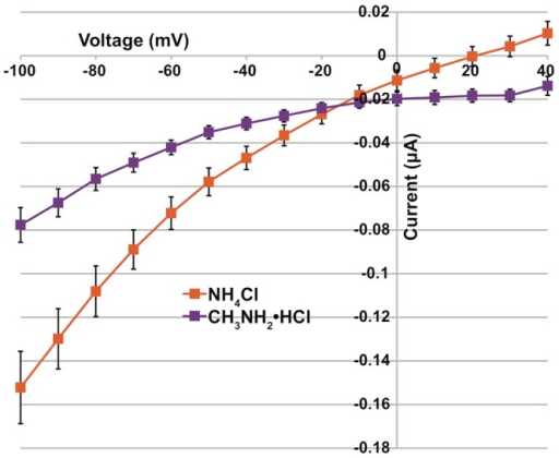 I–V Plot of whole cell conductances in oocytes expressing AgAmt.Current-voltage relationship for AgAmt cRNA injected oocytes to ammonium chloride (orange) and methylammonium chloride (purple). The x-axis shows voltage measured in millivolts and the y-axis shows current measured in microamps.