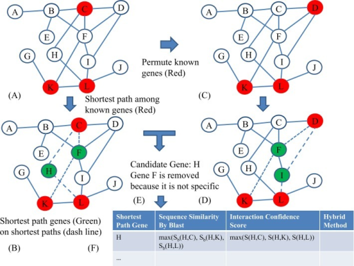 The workflow of hybrid method for novel reproduction gene identification.(A-E) were the steps of graph-based method, (F) was to filter candidates of the graph based method with similarity-based method and interaction-based method. (A) The known reproduction genes (red nodes) were mapped onto network. (B) The shortest path genes (green nodes) on shortest paths (dash line) were identified. (C) The known reproduction genes were permuted. (D) The shortest path genes on the shortest path between permuted reproduction genes were identified. (E) The actual betweenness of shortest path genes were compared with permuted betweenness and the genes that were not specific to reproduction were removed. (F) The candidates of the graph based method were further filtered by checking alignment score and interaction confidence score with known reproduction genes and novel candidate reproduction genes were selected if they were selected by graph-based method, similarity-based method and interaction-based method.