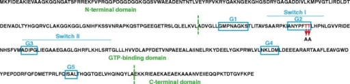 ObgGC domain architecture. The individual structural domains of ObgGC are shown in green. The N-terminal domain (amino acids 3–158) is glycine-rich. The central, GTP-binding domain (residues 160–348) includes two switch elements (switch I and switch II) and five conserved G motifs (G1-G5; indicated in blue boxes). The C-terminal domain contains clusters of acidic residues. The conserved T192 and T193 residues within the G2 motifs and introduced substitutions are designated in red