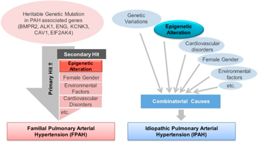 Proposed multifactorial pathogenesis of pulmonary arterial hypertension (PAH). This figure presents the complex nature of heritable PAH (HPAH) and idiopathic PAH (IPAH). In the case of HPAH, the major driver 'primary hit' maybe genetic mutation of HPA-associated genes. In many PAH patients, unknown or undetectable 'secondary hit' mechanisms such as epigenetic alteration, gender and other cardiovascular anomalies, as well as environmental factors, might cooperate in the progression of HPAH. Commonly, IPAH is caused by the combination effect of multiple cues such as non-heritable genetic or epigenetic variations, as well as environmental statuses.