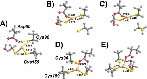 Addition of deprotonated thiol to MerB-bound Hg2+.(A) Thiolate-based Int1; (B) breaking the Cys159-Hg bond (transition state); (C) thiolate-based Int2 (C96-bound); (D) breaking the Cys96-Hg bond (transition state); (E) thiolate-based Int2 (C159-bound). Molecules (D–E) are depicted as seen from a point of view approximately opposite that used in the depiction of molecules (A–C). Relevant distances (in Ångstrom) are highlighted.