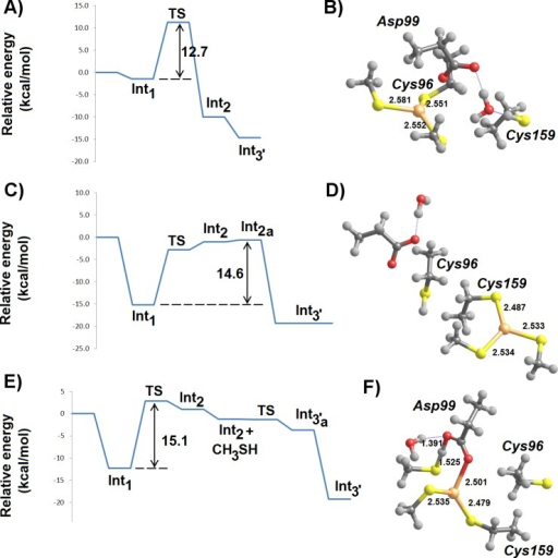 MP2/CBS//B3PW91/6-31G(d) energetic profiles (with ε = 20) and representative structures of intermediates arising from attack of Hg2+ by a thiol and a thiolate.(A) Energetic profile of Cys159-assisted thiol attack followed by thiolate addition; (B) structure of Int3′ arising from Cys159-assisted thiol attack; (C) energetic profile of Asp99-assisted thiol attack followed by thiolate addition; (D) structure of Int3′ arising from Asp99-assisted thiol attack followed by thiolate addition; (E) energetic profile of an initial thiolate attack followed by Asp99-assisted thiol addition to Hg2+; (F) structure of the transition state of Asp99-assisted thiol addition to thiolate-based Int 2. Relevant distances (in Ångstrom) are highlighted.