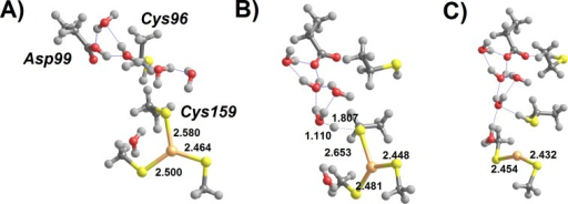 H3O+-assisted removal of Hg(SCH3)2 from the MerB active site (extended conformation)(A) Asp99-protonated Int3′ surrounded by water molecules; (B) proton transfer from Asp99 to Cys159 (transition state); (C) regenerated active site with released Hg(SCH3)2. Relevant distances (in Ångstrom) are highlighted.