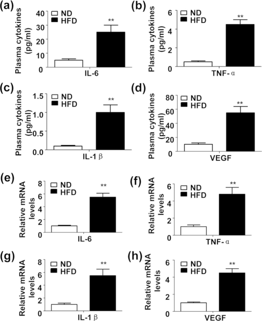 Increased production of proinflammatory cytokines and VEGF in the plasma and chondrocytes in high fat diet (HFD)-feeding mice.(a~d) levels of plasma IL-6 (a), TNF-α (b), IL-1β (c) and VEGF (d) in the C57BL/6 male mice fed with a normal diet (ND) or HFD for 8 weeks. (n = 5, **P < 0.01). (e~h) Relative mRNA expression of IL-6 (e), TNF-α (f), IL-1β (g) and VEGF (h) in the chondrocytes isolated from the 8-week ND or HFD-feeding mice. (n = 5, **P < 0.01).