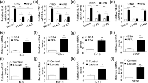 HFD-induced plasma saturated free fatty acid (FFA) and lactate trigger production of proinflammatory cytokines and VEGF in mouse chondrocytes.(a~d) Relative mRNA levels of IL-6 (a), TNF-α (b), IL-1β (c) and VEGF (d) in the mouse primary chondrocytes treated with full or fractionated (>3 KD or <3 KD) serum from the 8-week ND or HFD-feeding mice. (n = 3, *P < 0.05, **P < 0.01 and ***P < 0.005). (e~h) Relative mRNA levels of IL-6 (e), TNF-α (f), IL-1β (g) and VEGF (h) in the mouse primary chondrocytes treated with BSA (5%) or BSA-linked FFA (18:0, 200 μM) for 24 h. (n = 3, *P < 0.05 and **P < 0.01). (i~l) Relative mRNA expression of IL-6 (i), TNF-α (j), IL-1β (k) and VEGF (l) in the mouse primary chondrocytes treated with lactate (25 mM) or vehicle control for 24 h. (n = 3, *P < 0.05 and **P < 0.01).