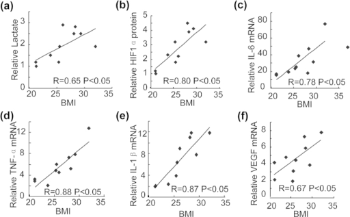 Correlation of plasma lactate, cartilage HIF1α and cytokine levels with the body mass index (BMI) in patients with osteoarthritis.(a) Correlation of plasma lactate levels with the BMI in human subjects (n = 10). Pearson's correlations: R = 0.65, and P < 0.05. (b) Correlation of HIF1α protein levels in the cartilages with the BMI in human subjects (n = 10). Pearson's correlations: R = 0.80, and P < 0.05. (c) Correlation of IL-6 mRNA levels in the cartilages with the BMI in human subjects (n = 10). Pearson's correlations: R = 0.78, and P < 0.05. (d) Correlation of TNF-α mRNA levels in the cartilages with the BMI in human subjects (n = 10). Pearson's correlations: R = 0.88, and P < 0.05. (e) Correlation of IL-1β mRNA levels in the cartilages with the BMI in human subjects (n = 10). Pearson's correlations: R = 0.87, and P < 0.05. (f) Correlation of VEGF mRNA levels in the cartilages with the BMI in human subjects (n = 10). Pearson's correlations: R = 0.67, and P < 0.05.