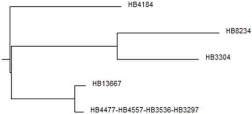 Phylogenetic tree. Multi-way DNA alignment of the concatenated housekeeping gene sequences.