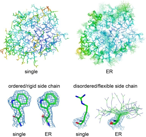 "Visualizing molecular flexibility using structural ensembles. Ensemble refinement of macromolecular crystal structures: from a single, B factor-weighted static model to a superimposed ""bouquet"" of structural conformations, providing deeper understanding of local flexibility even inside the crystal lattice. The structural models (represented as sticks) and electron density maps (blue mesh, 2Fo–Fc maps contoured at 1.2 σ) for single- and ensemble-refined data were from PDB files 4CBN and 4CBO, respectively (Forneris et al., 2014). The structures are colored based on their isotropic atomic B factors, using the same scale from 10 (blue) to 100 (red) Å2. Figure prepared using PyMol (Schrödinger, LLC, 2010)."