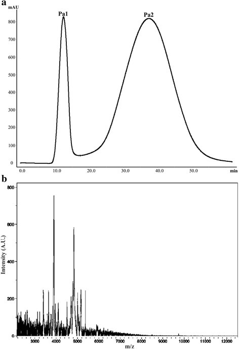 aP. astreoides extract elution profile obtained by FPLC on a Sephadex G-50 column at 280 nm. The column was equilibrated and eluted with 1.6 mM acetic acid at 1 mL/min. b MALDI-TOF of the second fraction (Pa2) after filtration with ultra-centrifugation filters with 10 K cut-off