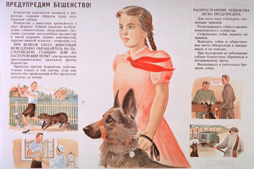 <p>Predominantly white poster with brown and black lettering.  All lettering in Cyrillic script.  Title in upper left corner.  Note in upper right corner indicates that it is easy to prevent the spread of rabies.  Dominant visual image is an illustration of a girl standing next to her muzzled dog.  Smaller illustrations depict a boy being bitten by a dog, the boy receiving an injection in his abdomen, a man and dog standing in front of a clerk's desk, and a dog catcher leading a dog toward a truck.  Publisher information in lower right corner.</p>