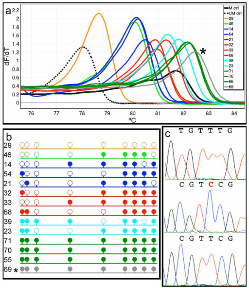 Sequencing analysis of dMS-HRM products from an acute myeloid leukaemia sample. PCR clones from sample 9164 were selected for sequencing as it showed the most variation, and was therefore the best example of the relationship of peak position to the degree of methylation. One representative of each peak observed from dMS-HRM is shown (a). Peaks are grouped within colours according to the number of CpG dinucleotides methylated as shown by sequencing and represented by lollipops, where open and filled circles represent unmethylated and methylated CpG sites, respectively (b). The order of clones in panel (b) reflects the order of peaks from left to right. The asterisk (*) marks PCR clone 69, as although it showed complete methylation, it also contained an unconverted cytosine. This is shown in the sequencing trace in the centre panel of (c), compared with an unmethylated sequence (above) and a methylated sequence (below). The incompletely converted cytosine is indicated in red. This incomplete conversion explains the higher Tm of this clone with respect to the other clones showing complete methylation.