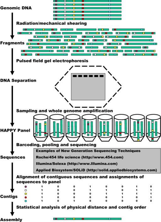 A Flow Chart Demonstration Of Happy Whole Genome Sequen Open I