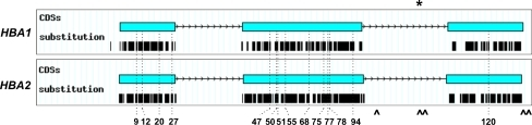 Schematic drawing of the 14 α-globin chain variants resulting from an identical mutation in either the HBA1 or HBA2 genes. Original graphs have been automatically generated by HbVar graphical display [8]. Thick lines under each coding sequence (CDS) represent the position of each substitution deposited in HbVar. Asterisk 3′ end of the human α-globin gene conversion tract [6], caret PSVs in the promoter and coding sequences of the human α-globin genes (c.300+55G/T, c.301-35_29GGCCCTCdel, c.301-24C/G, c.*+15G/A, c.*+19A/G) deducted from sequence comparison between the HBA2 and HBA1 reference sequences (NG_000006.1; see also Supplementary data)