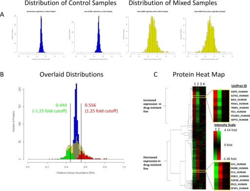 Distribution and heat map analysis of quantified proteins.A Histograms illustrating of the distribution of RIA's observed for the control samples (blue) and the mixed samples (yellow). B Histogram of the distribution of averaged RIA's with overlaid distributions of the proteins identified by ANOVA with significantly decreased ratios (green) and significantly increased ratios (red). Bars are included indicating a±1.25 fold change cutoff which was determined from cumulative distribution analysis of the control sample at the 99% confidence level. C Heat map generated from SILAC data comparing cisplatin resistant HeLa cells to normal HeLa cells. Lane 1 is light cisplatin resistant and heavy normal cells. Lane 2 is heavy cisplatin resistant and light normal cells. Lane 3 is a one to one mixture of light and heavy cisplatin resistant cells. Lane 4 is a one to one mixture of light and heavy normal cells.