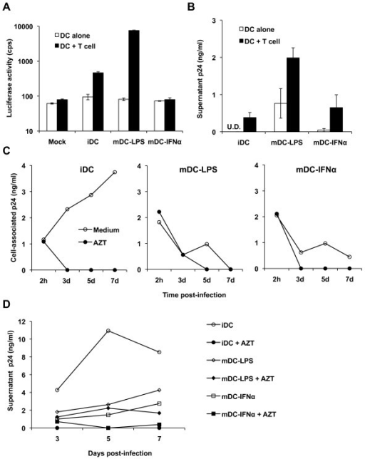 Transmission and replication of HIV-1 is restricted in mDC-IFNα. Transmission of HIV-1 by DCs was assessed by incubating DCs with either the single-cycle luciferase reporter HIV-1 or replication-competent HIV-1 NL(AD8) for 2 h, then co-cultured with Hut/CCR5 target cells for 3 or 2 days, respectively; transmission was assessed by whole-cell luciferase assay or release of p24 in supernatants. (A) mDC-IFNα do not enhance transmission of the single-cycle luciferase reporter virus to CD4+ T cells over iDC transmission levels. cps, counts per second. Mock, mock infected iDCs. Data represent mean ± SEM of three independent experiments performed on DCs from three different donors. U.D., undetectable (lower than detection limit). (B) mDC-IFNα do not enhance transmission of HIV-1 NL(AD8) to CD4+ T cells at 2 dpi (days post-infection) relative to iDC transmission levels. Graph represents mean data ± SEM from three independent experiments performed with DCs from three different donors. DCs were infected with WT NL(AD8) and p24 production in the cell lysates (C) or supernatants (D) was monitored after 2 h or 3-7 dpi using a p24 ELISA. AZT was used to assess productive HIV-1 infection. Data are from one experiment and representative of at least two independent experiments.