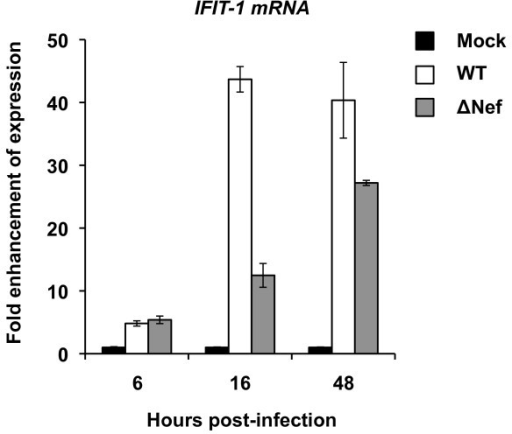 Nef enhances the expression levels of IFIT-1 mRNA in HIV-1-infected iDCs. The levels of IFIT-1 mRNA in iDCs mock infected or infected with WT NL(AD8) or NL(AD8)ΔNef were quantified using real-time RT-PCR. The IFIT-1 expression levels were normalized by the relative GAPDH expression levels. The results of mock-infected controls were assigned as 1 and the fold enhancement of IFIT-1 expression in HIV-1 infected iDCs is shown. WT, wild-type NL(AD8); ΔNef, NL(AD8)ΔNef. One representative experiment out of three is presented.