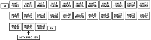 Generation of sequential mutants of 14.7K.The top row gives the names of the generated mutants. The bottom row displays the amino acid sequence of 14.7K replaced by a five amino acid Flag-tag (DYKDE). The arrow points to the C119S substitution, which was designated as 14.7K PM.