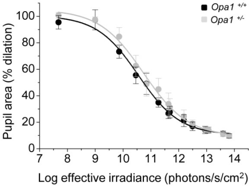 Pupil light reflex in Opa1+/+ and Opa1+/− mice.The average minimum pupil area expressed as a percentage of maximum dilation following illumination with various intensities of white light for Opa1+/+ (n = 5) and Opa1+/− (n = 5) mice. All data are fitted with four term sigmoidal functions (solid lines) of the form y = y0+a/(1+exp(-(x-x0)/b)) (goodness of fit of fitted curve to actual data (R2): Opa1+/+ = 0.993 and Opa1+/− = 0.995). A 2-way ANOVA using intensity and genotype as factors showed a significant effect of light intensity (p<0.0001) but no significant effect of genotype (p = 0.51) and no significant interaction between genotype and intensity (p = 0.99).