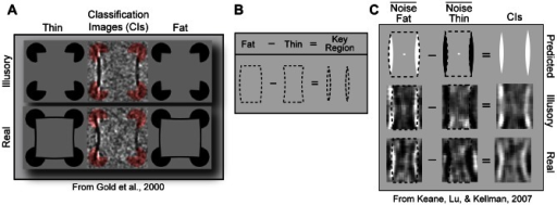 "Hypothesis and motivations for the experiments.(A) When subjects discriminated noise-corrupted fat and thin rectangles, noise near real and illusory contours correlated with response. (Modified from a figure courtesy of Jason Gold) (B) The present hypothesis is that correlated noise pixels correspond not to contours but to the surfaces that distinguish the fat and thin shapes–the ""key regions"". (C) Component images from Keane, Lu, and Kellman (2007) are shown for the illusory and real conditions along with superimposed fat and thin shapes. There is one component image for the fat response and one for the thin response. Each image is the summation of the average noise fields for correct and incorrect trials. The component images suggest that key region pixels biased a fat and thin response by being light and dark, respectively. The final CIs, which result from a simple subtraction, reveal that noise pixel contrast within the key regions positively correlated with a fat response and negatively correlated with a thin response (NB: Images in 1 C are of opposite polarity to Gold et al. (2000), only because in that study the subtraction sequence was reversed)."