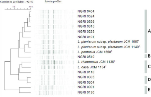 Protein profiles of representative LAB isolates and reference strains. The left-hand side of the figure shows the mean correlation coefficients expressed as percentages (r×100) and represented as a dendrogram calculated through UPGMA analysis of the selected strains. The right-hand side of the figure shows the delineation of the 5 clusters.