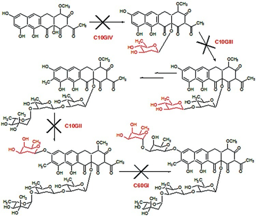 Scheme showing the glycosylation steps blocked during chromomycin biosynthesis in mutants S. griseus C60GI, C10GII, C10GIII and C10GIV.