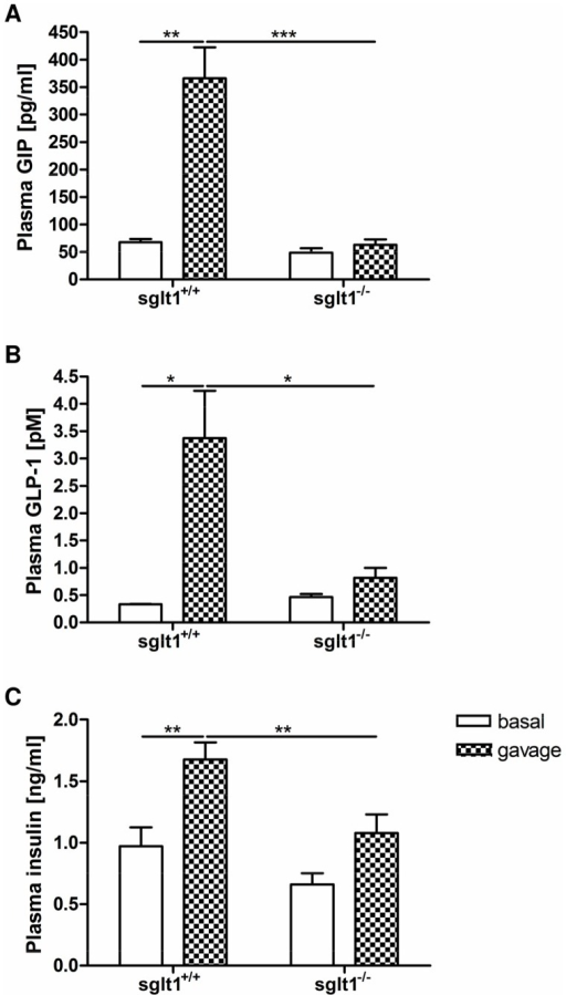 Increases in plasma GIP and GLP-1 levels after intragastric glucose are abolished in SGLT1-deficient mice.Sglt1+/+ and sglt1−/− mice were challenged with an oral glucose gavage (4 g/kg). Plasma GIP, GLP-1 and insulin hormone levels were measured before (white bars) and 15 minutes after the bolus (plaid bars). (A) Total GIP concentrations in the fasting state (basal) and after glucose gavage. (B) Active GLP-1 concentrations in the fasting state and after glucose gavage. (C) Insulin concentrations in the fasting state and after gavage. Values are expressed as mean ± SEM. Statistical analyses were performed using 2-way ANOVA with Bonferroni post-test. * p<0.05, ** p<0.01, *** p<0.001. N = 3–8 mice per group.