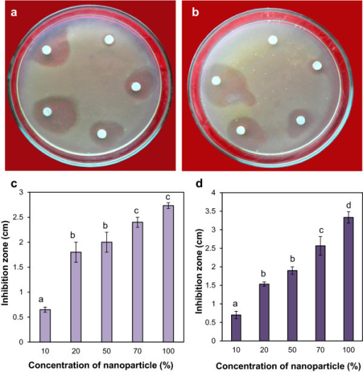 Antimicrobial effect of silver nanoparticles on normal and multidrug-resistant plant pathogenic bacteria A. tumefaciens by disc diffusion method. (a) Plate showing increasing inhibition zone of A. tumefaciens (LBA4404) with increasing concentrations of nanoparticles: clockwise from top 0.51, 1.02, 2.55, 3.57, and 5.1 μg in a total a volume 100 μl in water. (b) Plate showing increasing inhibition zone of MDR A. tumefaciens (LBA4404-MDR) with increasing concentration of nanoparticles: clockwise from top 0.51, 1.02, 2.55, 3.57, and 5.1 μg in a total volume of 100 μl in water. (c) Graph of antimicrobial assay of the nanoparticles on A. tumefaciens (LBA4404) in which 10, 20, 50, 70, and 100% nanoparticle solution corresponds to 0.51, 1.02, 2.55, 3.57, and 5.1 μg of silver nanoparticles in 100 μl solution. (d) Graph of antimicrobial assay of the silver nanoparticles on MDR A. tumefaciens (LBA4404-MDR). Vertical bars indicate mean of three experiments ± standard error of mean (SEM). Different letters on bars indicate significant differences among treatments (P = 0.05).