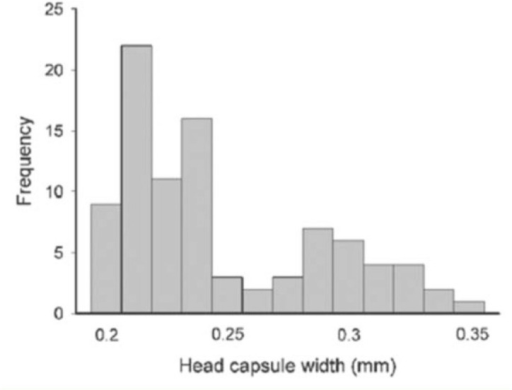 Frequency distribution of head capsule width measurements of the two black head instars of Lepidomys. High quality figures are available online.