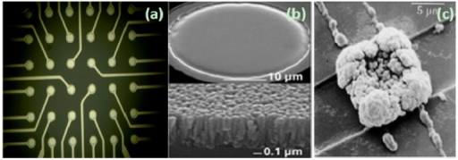 The surface morphology of microelectrodes with different treatment. (a) The chip layout of a 6 × 6 microelectrode array; (b) A microelectrode sputtered with TiN (http://www.multichannelsystems.com/); (c) A microelectrode electroplated with platinum black. (Reprinted from [38]. © 1980, with permission from Elsevier).