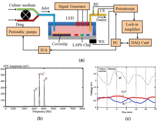 Multianalyte microphysiometer studies based on LAPS. (a) The schematic drawing of the multiparameter-LAPS system to different extracellular ions (H+, K+, and Ca2+); (b) FFT analysis of signals from three sensitive membranes with three light sources; (c) Simultaneous analyzing of H+, K+, Ca2+ by multi-LAPS. (Reprinted from [29]. © 2001, with permission from Elsevier).