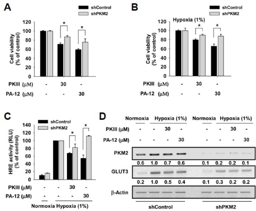 The anticancer effects of PA-12 are dependent on PKM2 expression. (A and B) PKM2 depletion desensitizes cancer cells to PA-12 treatment in an NEAA-depleted medium in normoxia (A) and under hypoxia (B). (C) The inhibitory effect of PA-12 on HRE reporter activity is dependent on PKM2 expression. The cells were pretreated with PA-12 or PKIII for 2 h and then cultured for 12 h under hypoxia. HRE reporter activity was measured by a luciferase assay. (D) The inhibitory effect of PA-12 on the hypoxic expression of HIF target gene, GLUT3, is dependent on PKM2 expression. Stable shPKM2 and shControl cells were pretreated with PA-12 or PKIII for 2 h and then cultured for 12 h under hypoxia. Gene expression was analyzed by RT-PCR. Numbers under the graphic RT-PCR data are quantitative estimations of the band intensity made using Image J program. Similar results were obtained from three independent experiments, and representative data are shown.