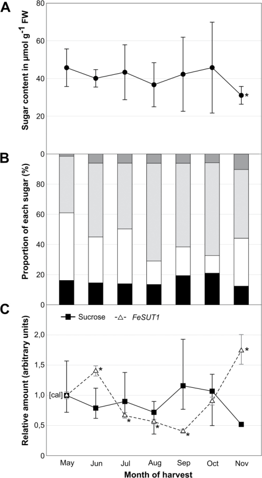 Sugar and sugar alcohol content as well as FeSUT1 expression in leaves of F. excelsior during growing season. Samples were taken over a period of 3 years (2010–2012) from three individual trees from a 25- to 30-year-old forest. (A) Total sugar and sugar alcohol content in leaves. (B) Relative amounts of sugar and sugar alcohol at the total content. (C) Relative sucrose content (■, closed squares, continuous line) and relative expression of FeSUT1 (Δ, open triangles, broken line). Expression levels of FeSUT1 were normalized to actin and values are given as relative expression levels to the first sample of the measurement (calibrator [cal]). Student's t-test was performed with P ≤ 0.05 to test for significance of changes compared to calibrator [cal].