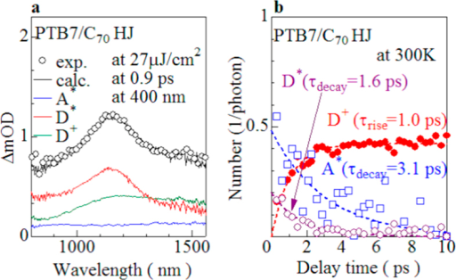(a) ΔOD spectra (open circles) of PTB7/C70 bilayer film at 0.9 ps and at 400 nm together with the spectral decomposition into acceptor exciton (A*: blue curve), donor exciton (D*: green curve), and donor carrier (D+ : red curve) components. The ΔOD spectra of the PC71BM neat, PTB7 neat, and PTB7/C70 bilayer films at 1, 1, and 10 ps are regarded as the A*, D*, and D+ components, respectively. (b) Absolute number of acceptor exciton (nA*), donor exciton (nD*) and donor carrier (nD+) per an absorbed photon against the delay time. The magnitudes of nA*, nD* and nD+ were evaluated by the spectral decomposition of the ΔOD spectra of the PTB7/C70 bilayer film. The solid curves are results of the least-squares fittings with an exponential function.