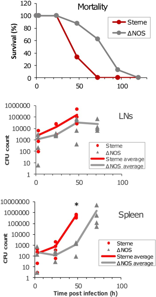Mortality curves and bacterial load in LNs and the spleen of spore-challenged DBA/2J mice. Animals were challenged with the toxinogenic, non-encapsulated Bacillus anthracis Sterne 34F2 or ΔNOS knockout Sterne spores (4 × 106 spores in 20 μl of PBS), intradermally into both hind footpads. Twenty animals were used for each strain to obtain the mortality curves. Four animals were euthanized at each time point to determine a bacterial load in the LNs and spleen. The organs were surgically removed and homogenized. The homogenates were seeded onto agar plates to determine the number of colony-forming units (CFUs). The CFU values are shown for each animal, and the lines in the panels are drawn through the average CFU values for each time point. A statistically reliable difference (t-test, p < 0.001) between Sterne and ΔNOS in the spleen at 48 h post challenge is indicated by an asterisk.