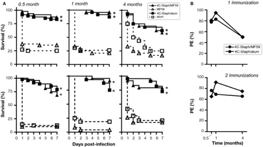 4C-Staph formulations induced persistent protection against S. aureus. CD1 mice were immunized once or twice with 4C-Staph, 4C-Staph/MF59, and 4C-Staph/alum (n = 10) and challenged with S. aureus 0.5, 1, or 4 months after immunization. Animals were monitored for 7 days post-infection for health status. (A) Survival and (B) protective efficacy (PE) calculated (as described in Materials and Methods) on day 7 post-infection. Graphs represent the merge of at least two separate experiments (n = 16–24). Statistical analysis was performed using Mantel–Cox test; survival in the groups receiving the formulated 4C-Staph vaccines were compared to their respective control. *p < 0.05.