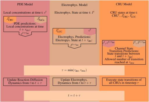 A schematic illustrating the basic steps for a single iteration. Orange marks all values produced and all work done by the CRU-Model. The work and results of the PDE-Model are marked in red, everything involved with the Electrophysiology ODE-Model (Electrophys. in the diagram) is marked in brown. A superscript t marks the value of a given quantity at time t, while a superscript t + τ denotes the predicted value of that quantity at time t + τ, e.g., the prediction step for the PDE-Model uses the flux values from the CRU and ODE-Model at time t. The CRU Transition Prediction step uses both the current values at time t and the predicted values at time t + τ from the PDE- and ODE-model.