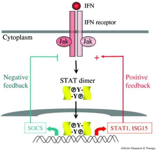 the role of negative feedback in The role of time delay in adaptive cellular negative feedback with delayed negative feedback describing the feedback loops: the role of gro.