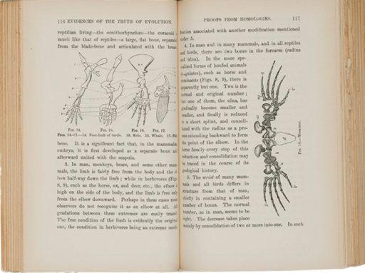 <p>Image of book text and two illustrations. Left side (p. 116) shows homologies of the bones in the arm-like extremities of frog, turtle, mole, and whale (with fish just off scan). Image (p. 117) shows arm bones of a mosasaur, a serpentine marine reptile.</p>