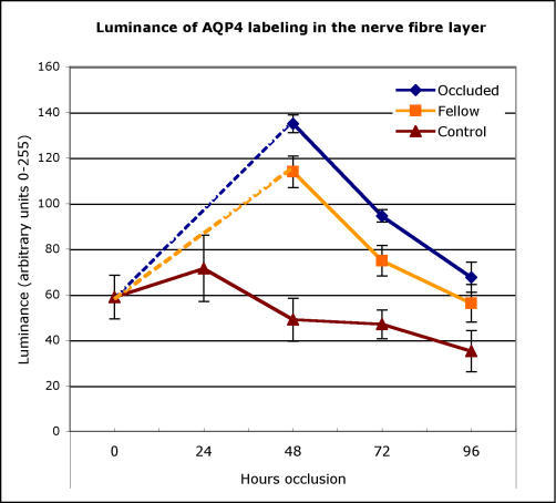 Intensity of AQP4 antibody labeling in the nerve fiber layer of chick. The mean relative fluorescence (on an arbitrary scale of 0 to 255) of AQP4/Alexa 596 conjugated antibodies expressed in the nerve fiber layer of the retinae of age-matched normal control eyes (triangles) and both non-deprived eyes (squares) and fellow eyes that experienced form deprivation (diamonds) is plotted against time from initiation of occlusion of the experimental eye. Note that initially intensity of AQP4 labeling is slightly raised in normal eyes and falls with time and increase in eye size. In contrast, occlusion initially causes significant elevation of labeling intensity particularly in the form-deprived eye, but also in the non-occluded fellow eye, which falls with duration of form-deprivation to almost reach control levels after 4 days. Error bars are 1 standard error.