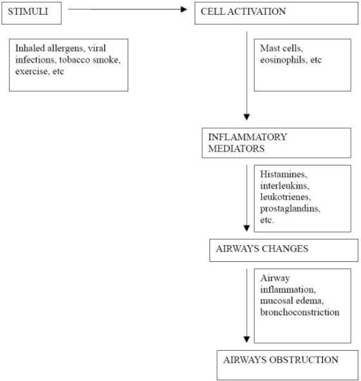Pathogenesis of airway obstruction in asthma.